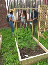 Lesson 1 Ms.Shevon Showing The Kids Herbs Peppermint