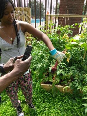 Lesson 2 Jalesa Harvesting Beets