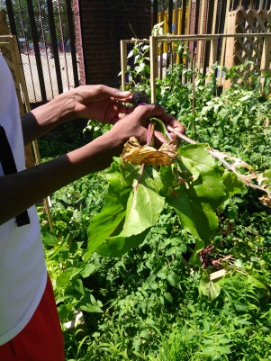 Lesson 2 Kids Checking Out The Beets That They Harvest