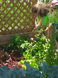 Lesson 4 Collecting Parsley