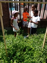 Lesson 4 Kids In The Garden Picking Parsley