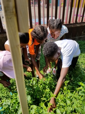 Lesson 4 Kids Picking Parsley