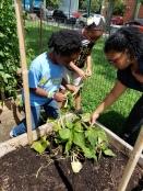 Lesson 5 In The Garden