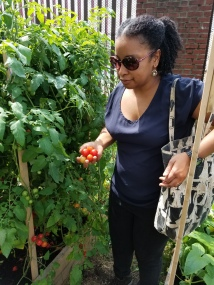 Lesson 5 Picking Ms. Shevon Tomatoes