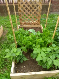 Red Hook Garden Bed