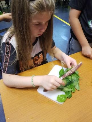 Gabby cutting basil