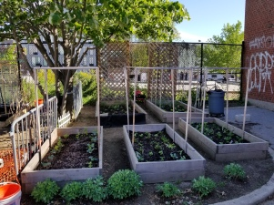 planting beds