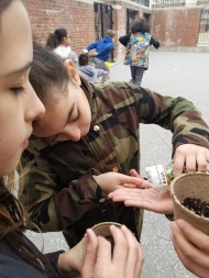 Pouring seeds