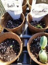 seedlings up close