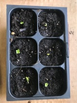 Seedlings 5