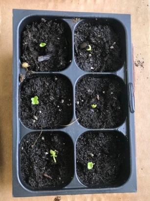 Seedlings 5