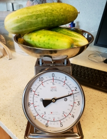 cucumbers on the scale